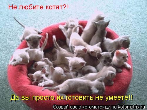 Котоматрица: Не любите котят?! Да вы просто их готовить не умеете!!