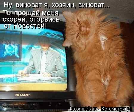 Котоматрица: Ну, виноват я, хозяин, виноват... Ты прощай меня скорей, оторвись  от Новостей!