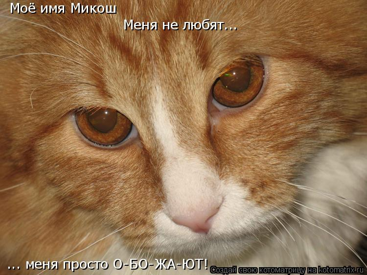 Котоматрица: Моё имя Микош  ... меня просто О-БО-ЖА-ЮТ! Меня не любят...