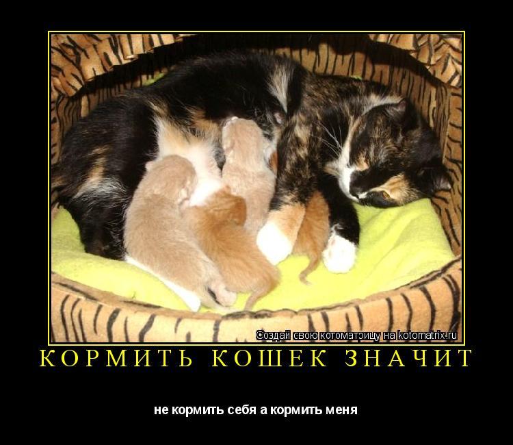 Котоматрица: кормить кошек значит не кормить себя а кормить меня