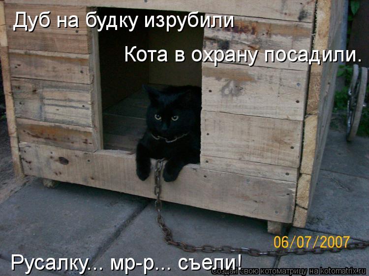 Котоматрица: Дуб на будку изрубили Кота в охрану посадили. Русалку... мр-р... съели!