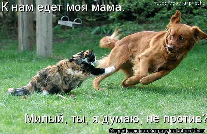 Котоматрица: К нам едет моя мама. Милый, ты, я думаю, не против?