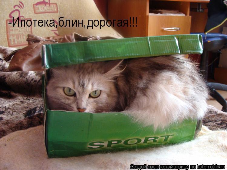Котоматрица: -Ипотека,блин,дорогая!!!
