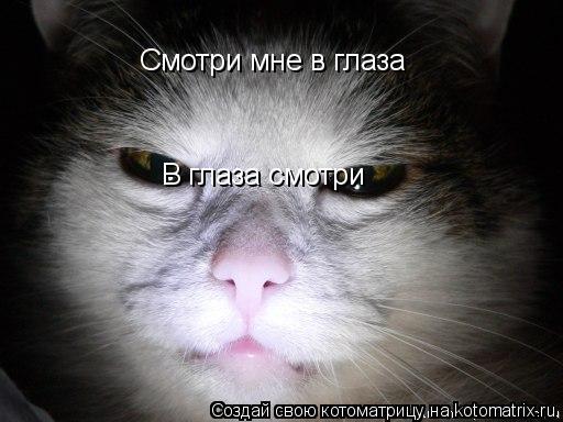 Котоматрица: Смотри мне в глаза В глаза смотри