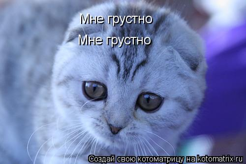 Котоматрица: Мне грустно  Мне грустно