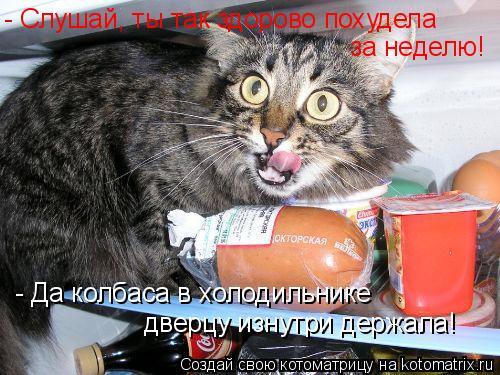Котоматрица: - Слушай, ты так здорово похудела  за неделю! - Да колбаса в холодильнике  дверцу изнутри держала!