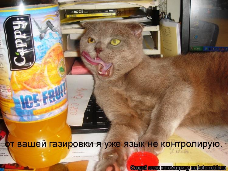 Котоматрица: от вашей газировки я уже язык не контролирую.