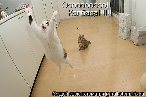 Котоматрица: Оооооооооо!!! Колбаса!!!!!!