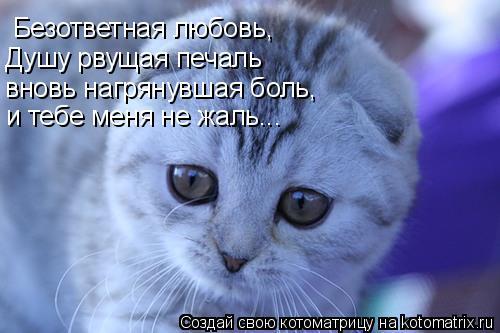 Котоматрица: Безответная любовь, Душу рвущая печаль вновь нагрянувшая боль, и тебе меня не жаль...