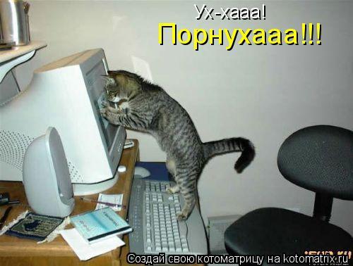 Котоматрица: Ух-хааа! Порнухааа!!!
