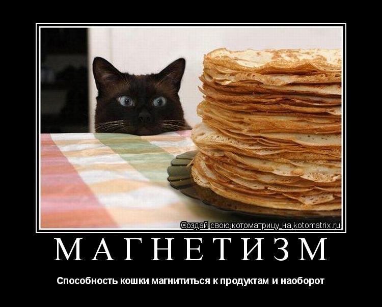Котоматрица: Магнетизм Способность кошки магнититься к продуктам и наоборот
