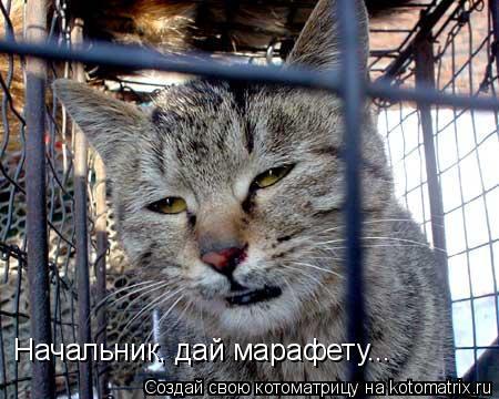 """""""Фантом"""" не пропустил на оккупированную территорию Донбасса партии биодобавок и подшипников - Цензор.НЕТ 1660"""