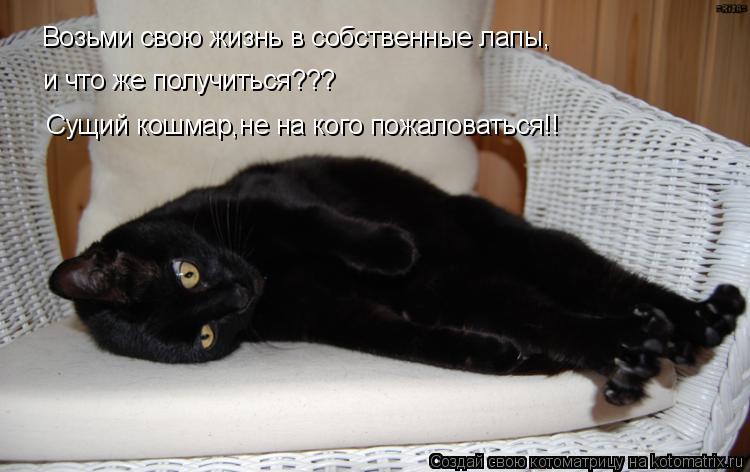 Котоматрица: Возьми свою жизнь в собственные лапы, и что же получиться??? Сущий кошмар,не на кого пожаловаться!!