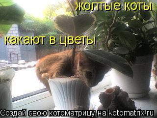 Котоматрица: какают в цветы жолтые коты