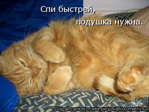 Котоматрица: Спи быстрей,  подушка нужна.
