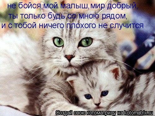 Котоматрица: не бойся,мой малыш,мир добрый, ты только будь со мною рядом, и с тобой ничего плохого не случится