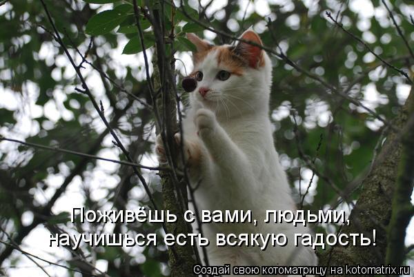 Котоматрица: Поживёшь с вами, людьми,  научишься есть всякую гадость!