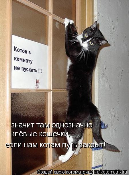 Котоматрица: значит там однозначно  клёвые кошечки, если нам котам путь закрыт!
