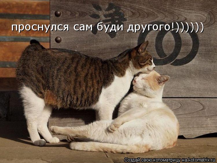 Котоматрица: проснулся сам буди другого!))))))