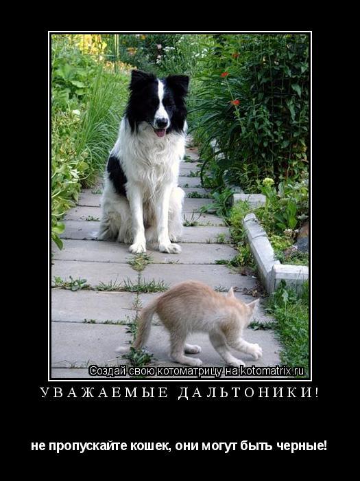 Котоматрица: УВАЖАЕМЫЕ ДАЛЬТОНИКИ! не пропускайте кошек, они могут быть черные!