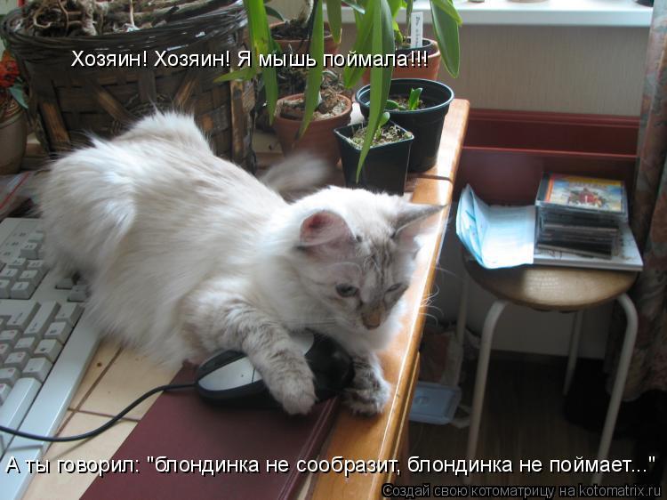 """Котоматрица: Хозяин! Хозяин! Я мышь поймала!!! А ты говорил: """"блондинка не сообразит, блондинка не поймает..."""""""