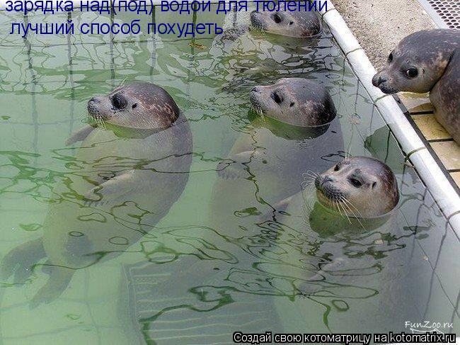 Котоматрица: зарядка над(под) водой для тюлений лучший способ похудеть