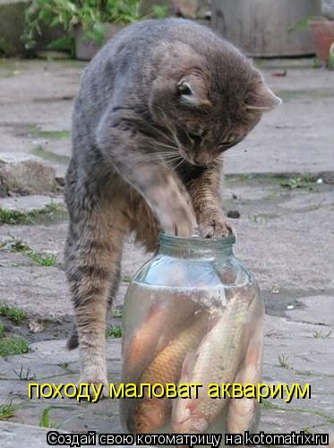 Котоматрица: походу маловат аквариум