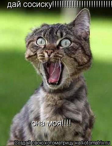 Котоматрица: дай сосиску!!!!!!!!!!!!!!!!!!!!!!!!!! она моя!!!!