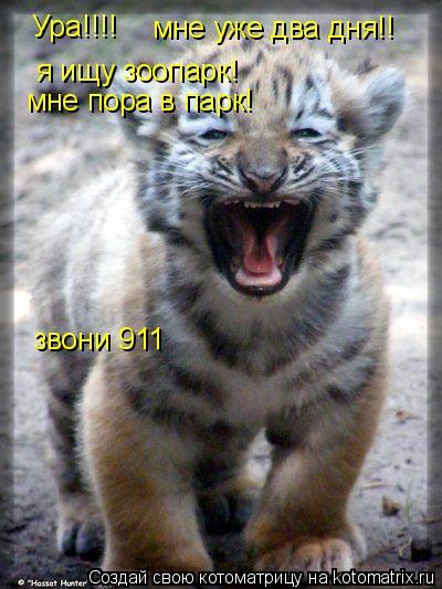 Котоматрица: Ура!!!! мне уже два дня!! я ищу зоопарк! мне пора в парк! звони 911
