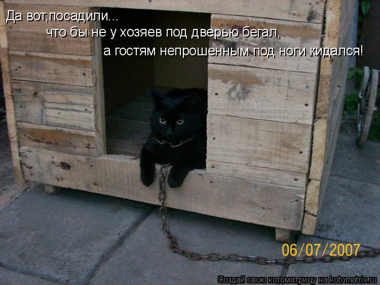 Котоматрица: Да вот,посадили...  что бы не у хозяев под дверью бегал, а гостям непрошенным под ноги кидался!