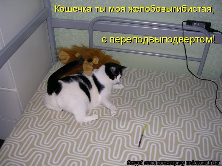 Котоматрица: Кошечка ты моя желобовыгибистая, с переподвыподвертом!