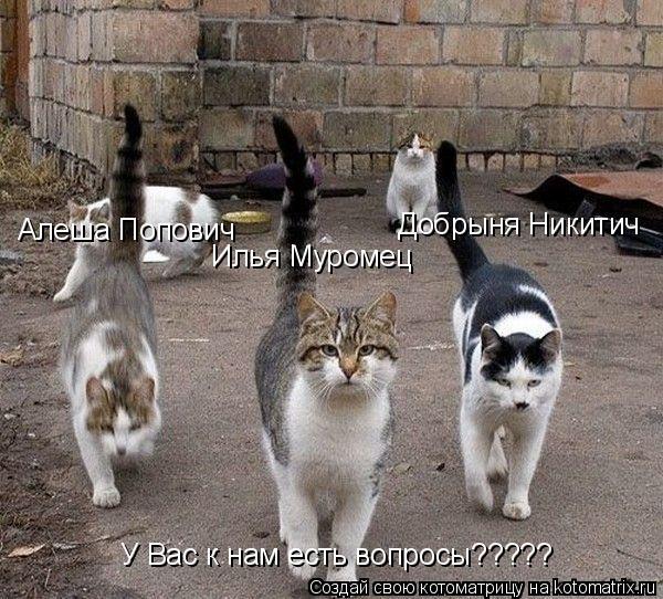 Котоматрица: Илья Муромец Добрыня Никитич Алеша Попович У Вас к нам есть вопросы?????