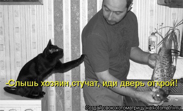 Котоматрица: -Слышь хозяин,стучат, иди дверь открой!