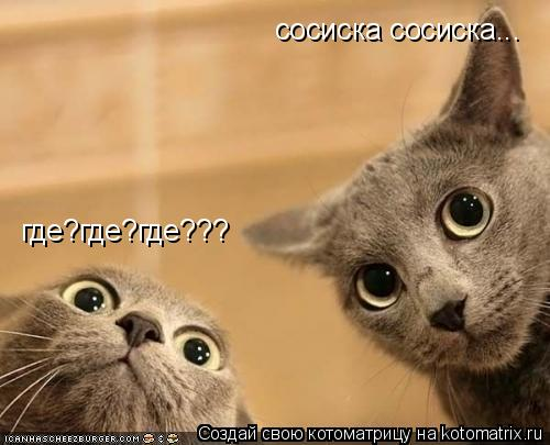 Котоматрица: сосиска сосиска... где?где?где???