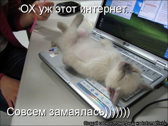 Котоматрица: ОХ уж этот интернет... Совсем замаялась)))))))
