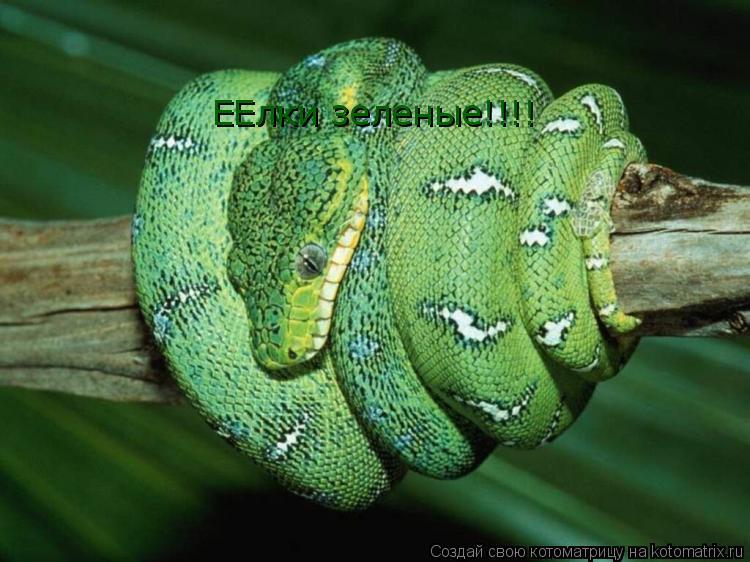 Котоматрица: ЕЕлки зеленые!!!!