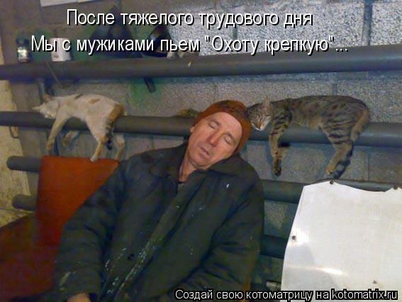 """Котоматрица: После тяжелого трудового дня  Мы с мужиками пьем """"Охоту крепкую""""..."""