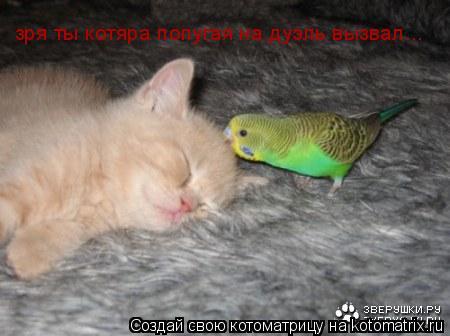 Котоматрица: зря ты котяра попугая на дуэль вызвал...