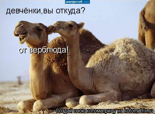 Котоматрица: девчёнки,вы откуда? от верблюда!