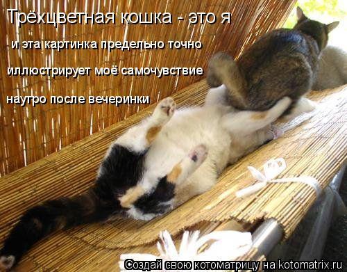 Котоматрица: Трёхцветная кошка - это я и эта картинка предельно точно иллюстрирует моё самочувствие наутро после вечеринки
