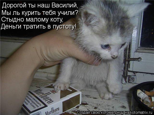 Котоматрица: Дорогой ты наш Василий, Мы ль курить тебя учили? Стыдно малому коту, Деньги тратить в пустоту!