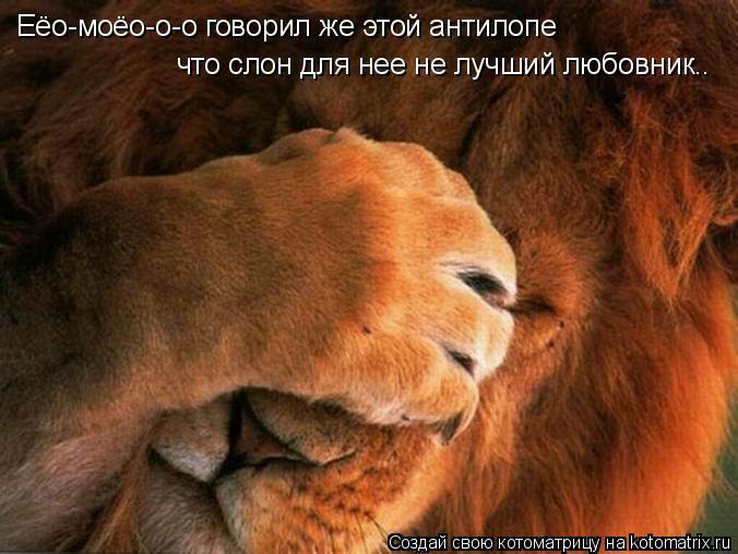 Котоматрица: Еёо-моёо-о-о говорил же этой антилопе  что слон для нее не лучший любовник..