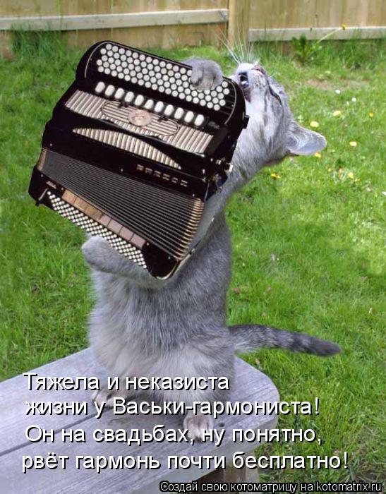 Котоматрица: Тяжела и неказиста  жизни у Васьки-гармониста! Он на свадьбах, ну понятно, рвёт гармонь почти бесплатно!