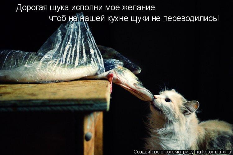 Котоматрица: Дорогая щука,исполни моё желание, чтоб на нашей кухне щуки не переводились!