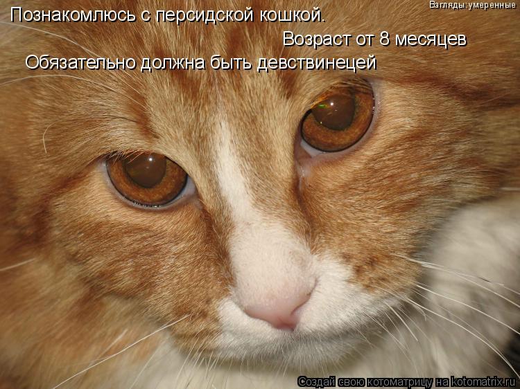 Котоматрица: Познакомлюсь с персидской кошкой. Возраст от 8 месяцев Обязательно должна быть девствинецей Взгляды:умеренные