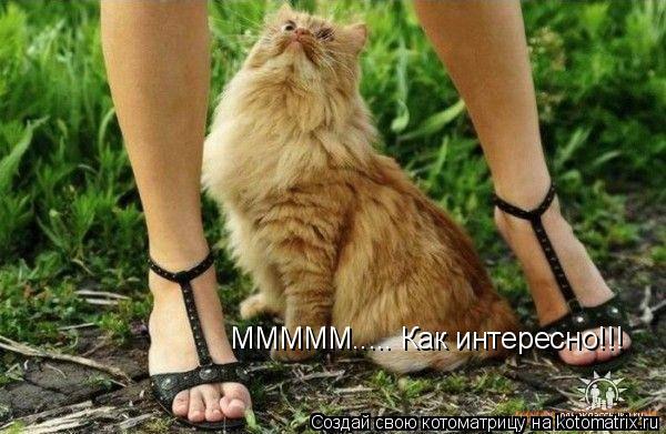 Котоматрица: МММММ..... Как интересно!!!