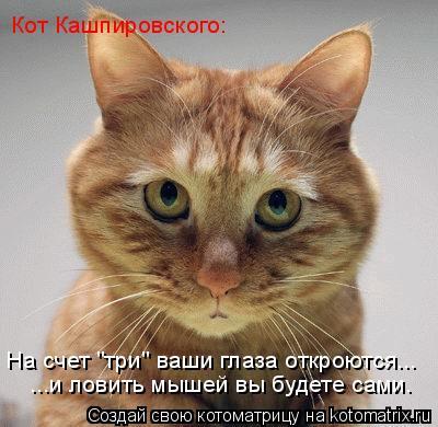 """Котоматрица: На счет """"три"""" ваши глаза откроются... Кот Кашпировского: ...и ловить мышей вы будете сами."""