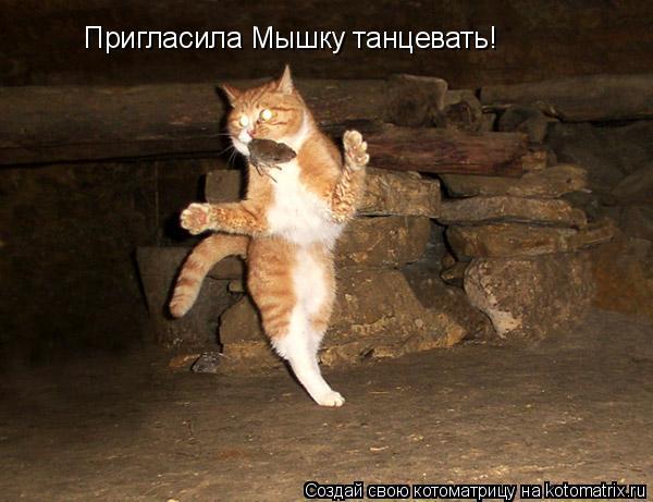Котоматрица: Пригласила Мышку танцевать!