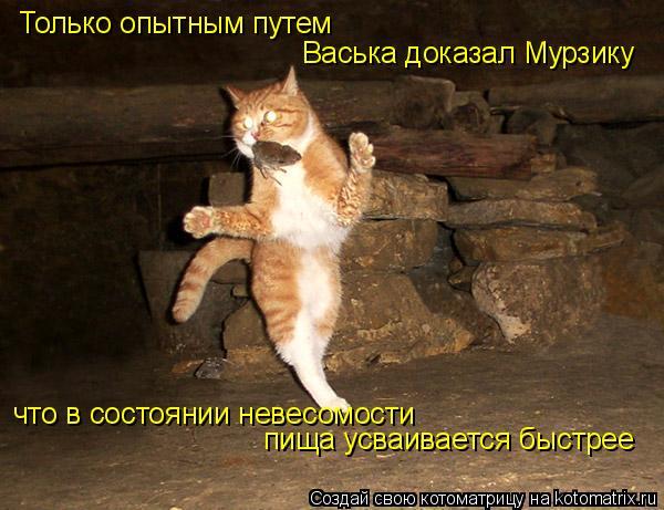 Котоматрица: Только опытным путем  Васька доказал Мурзику что в состоянии невесомости пища усваивается быстрее