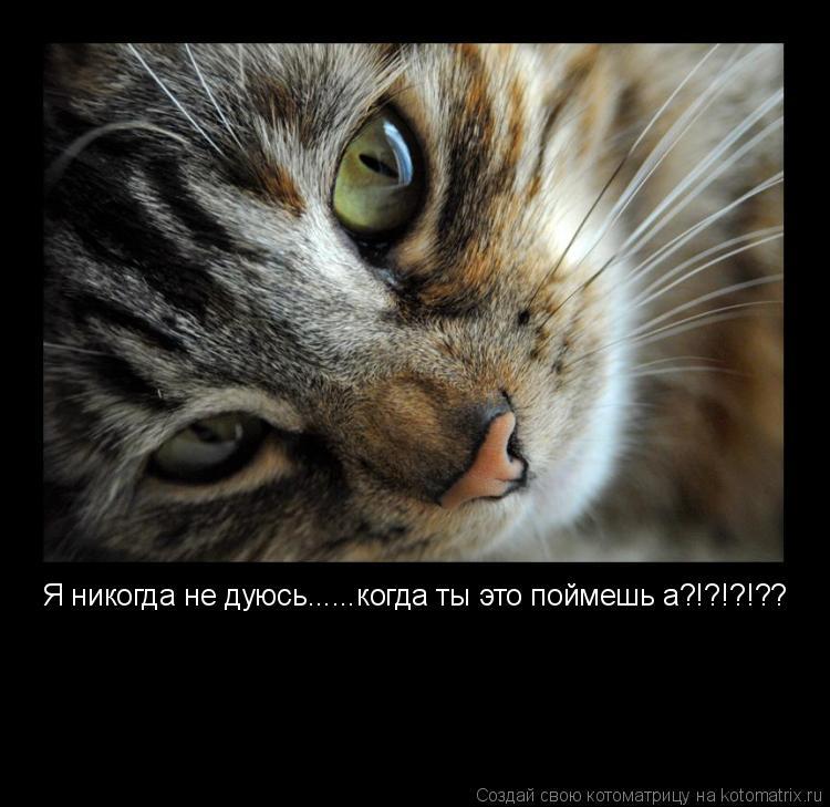 Котоматрица: Я никогда не дуюсь......когда ты это поймешь а?!?!?!??
